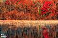 Red Oak print