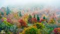 Misty Mountain Color print