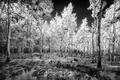 Aspen Meadow print