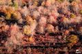 Fall Line print