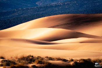golden, light, morning, utah, kanab, sand, dunes