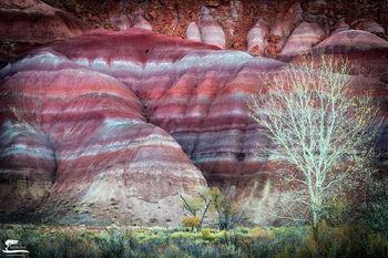 separation, love, photographing, trees, sw, Utah, pair, colors, morning, light, season, soil, incredible