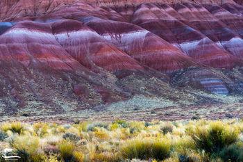 glowing, morning, light, sage, pair, town, site, south, west, Utah, velvet