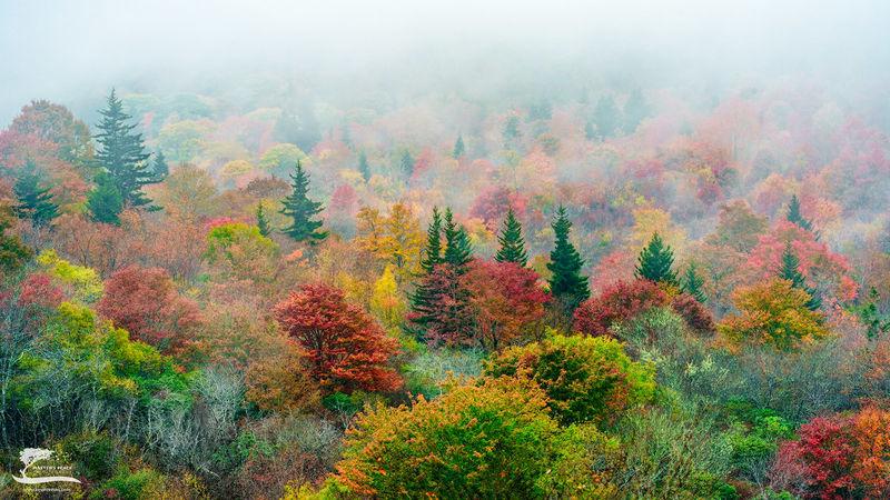 Misty Mountain Color