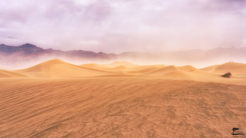 california, dunes, sand, storm, blowing, winds, afternoon, death, valley, national, park