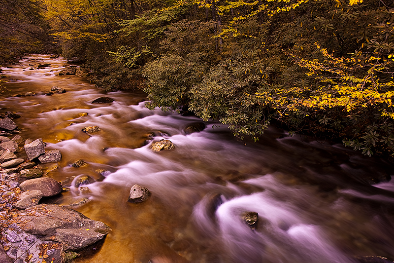 This shot was taken along the road on a snowy morning in GSMNP. The water reflected the golden color of the leaves making...