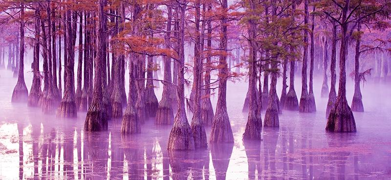 sunrise,cypress,trees,lake,reflections, photo