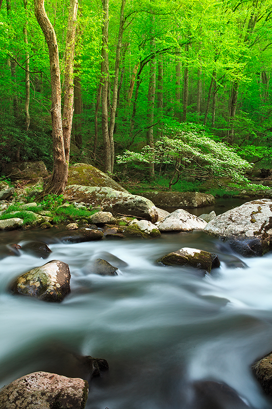 This is an image from the GSMNP in the Tremont area near Cades Cove. The thing that caught my attention from this scene...