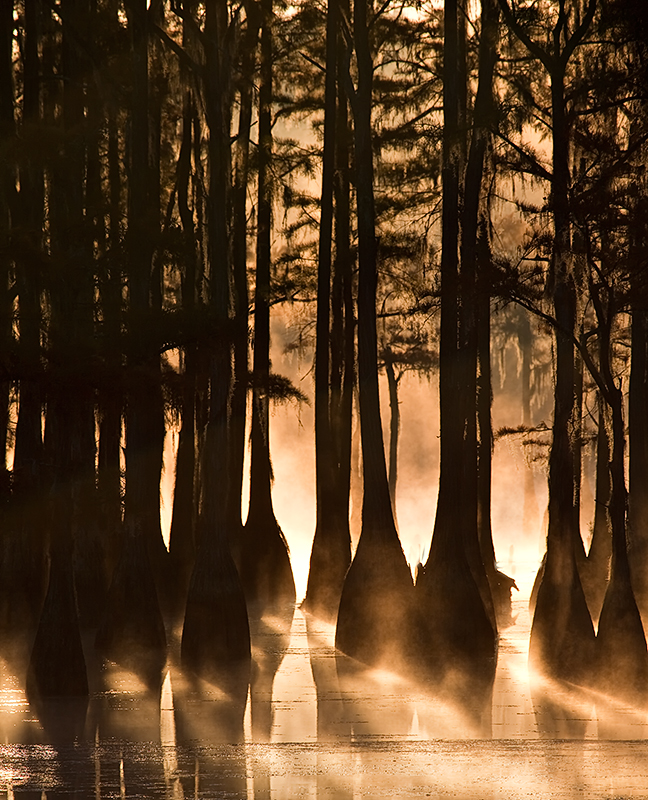 trees,silhouette,water,georgia,state parks, photo