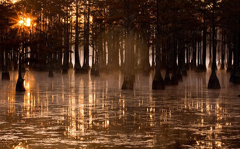 trees,sun,sunrise,water,fog, photo