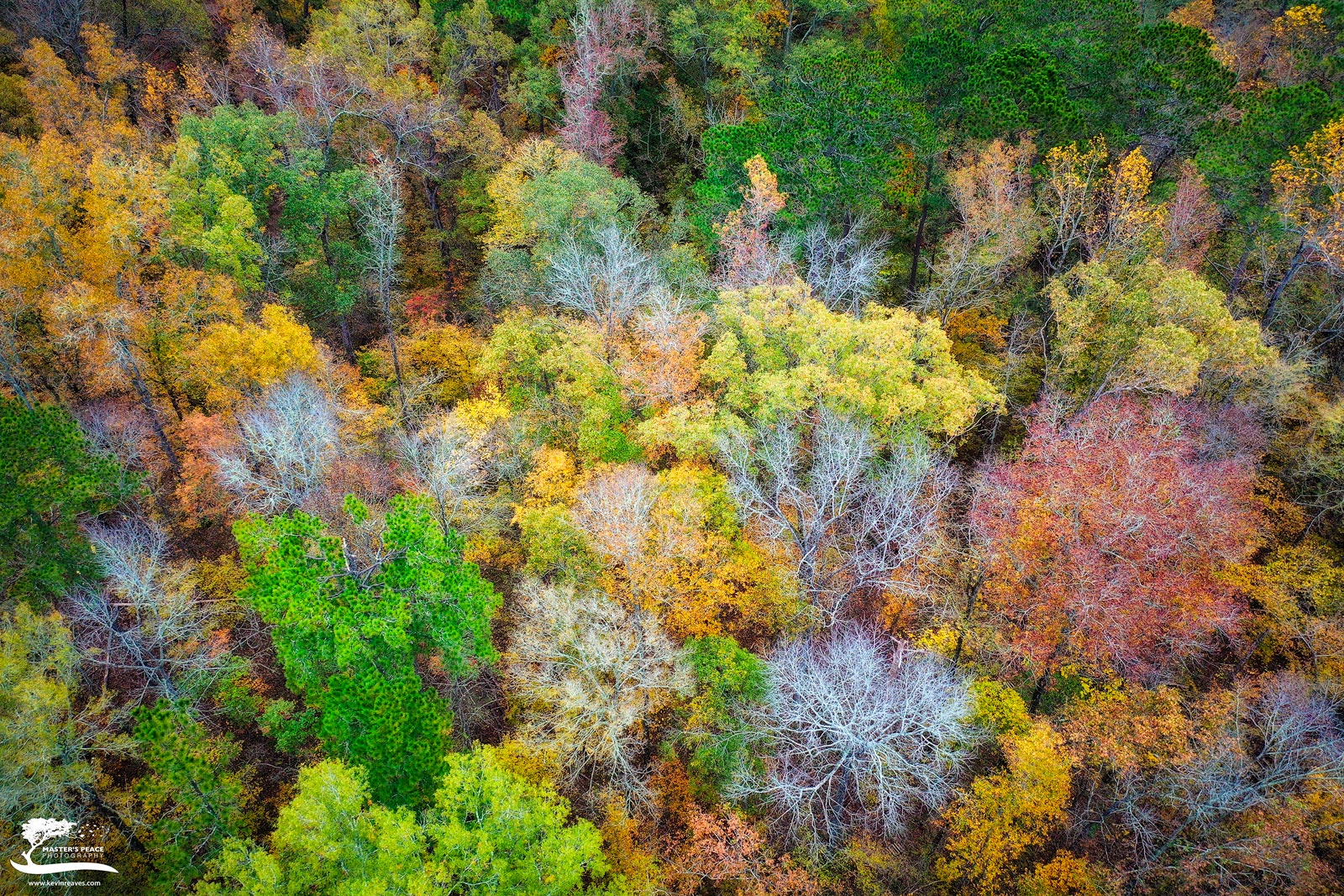 drone, georgia, macon, trees, perspective, photo