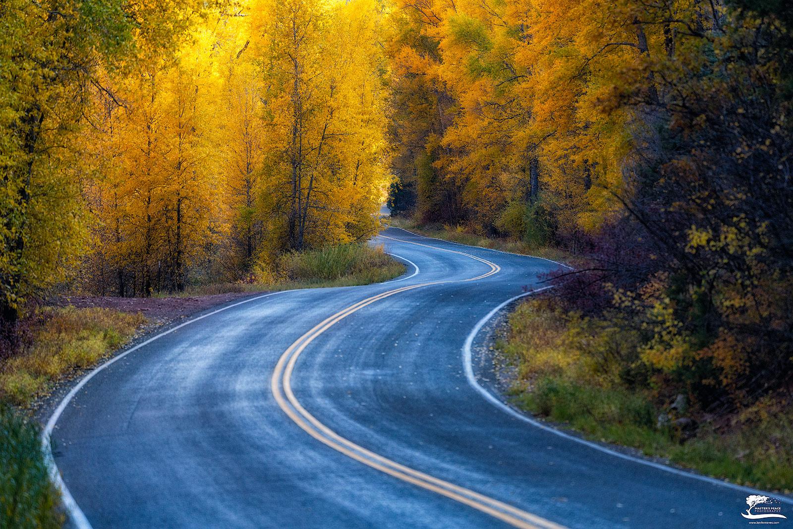 placerville, aspens, fall, telluride, photo