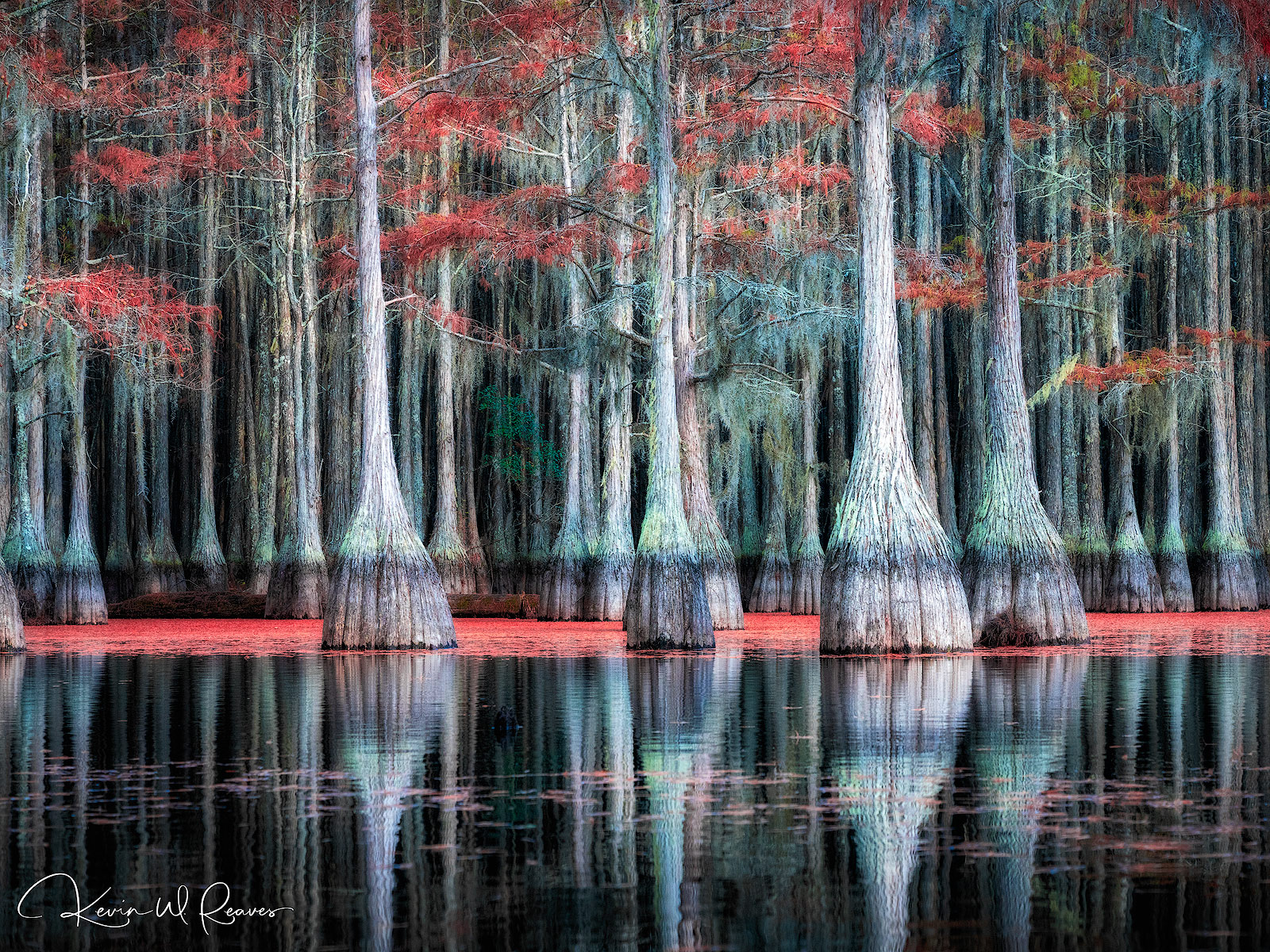 I love cypress trees.  There is a mystery to them that makes me think of how they grow in the water and multiply fairly quickly...