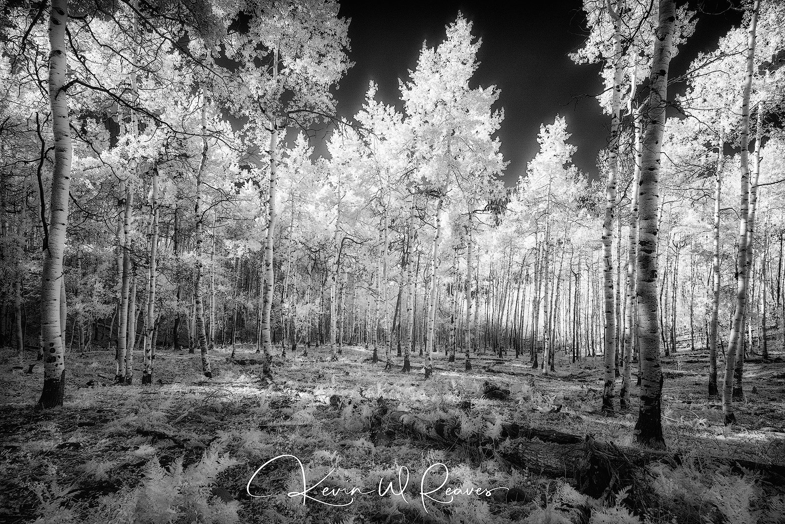 Fall is by far my favorite season, and there is no place I had rather be than in Colorado photographing the Aspens.  This is...