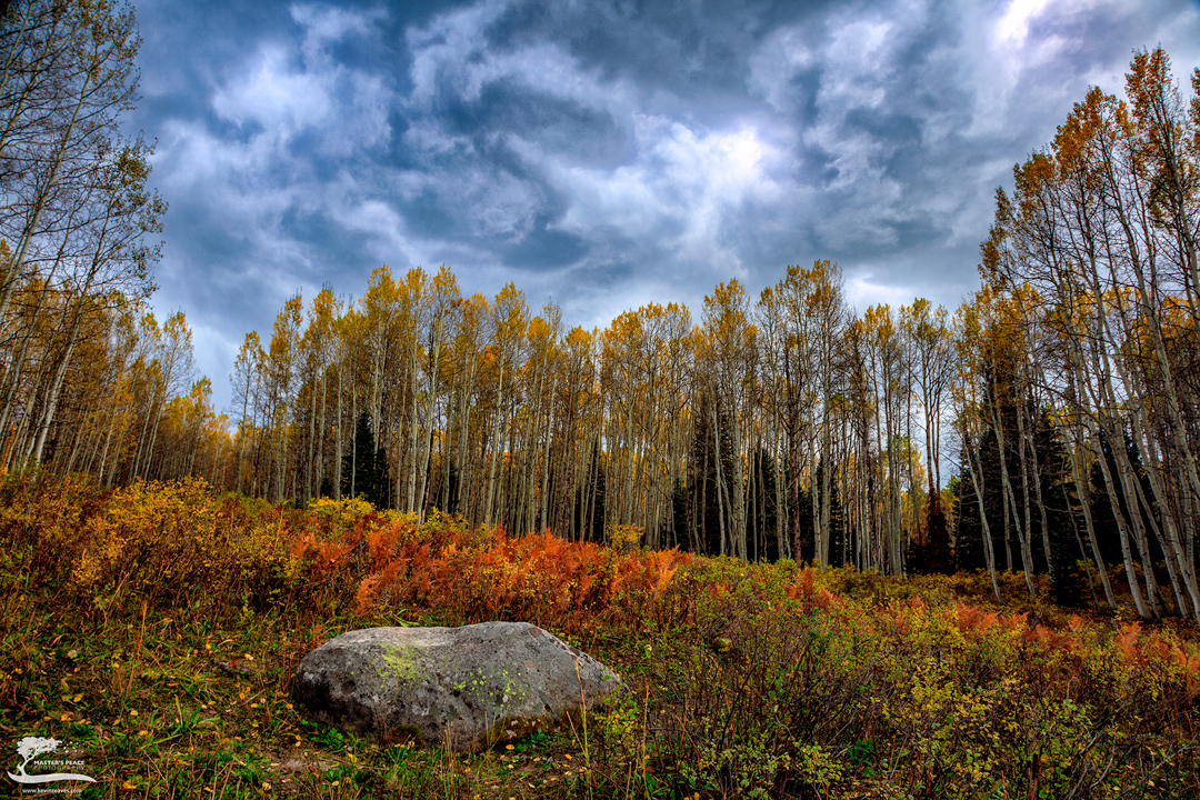 colorado, kebler, crested butte, fall, aspens, trees, forest