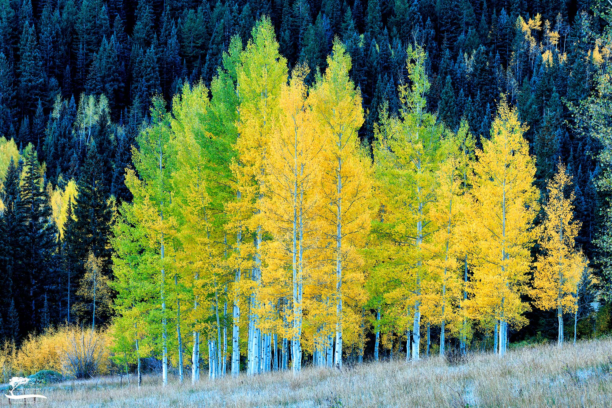 This is the same little Aspen grove I photographed several years ago. The only difference being that the previous time...